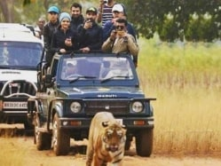 After Series Win Versus South Africa, Team India Goes on Tiger Safari