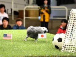 Women's World Cup: Olivia the Parrot Predicts a Japan Victory