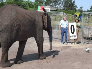 FIFA World Cup 2014: Nelly the Elephant, the Fortune-Teller