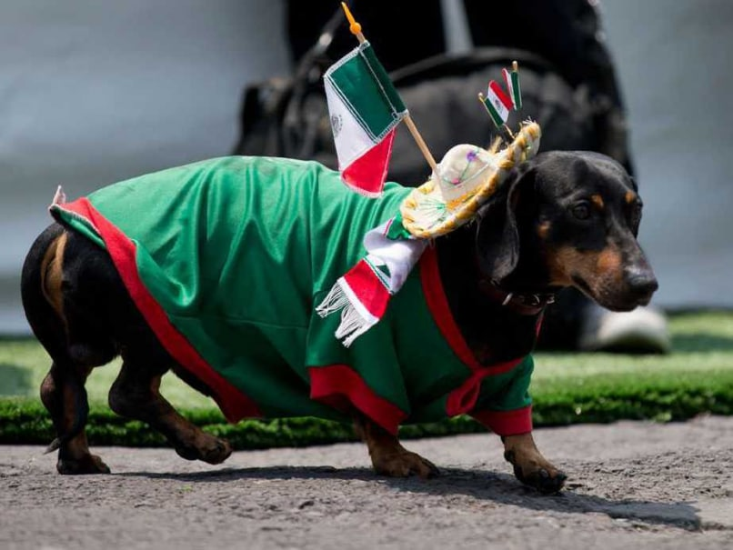 World Cup 2014 Kitsch: From Dog Jerseys to Brazil Condoms