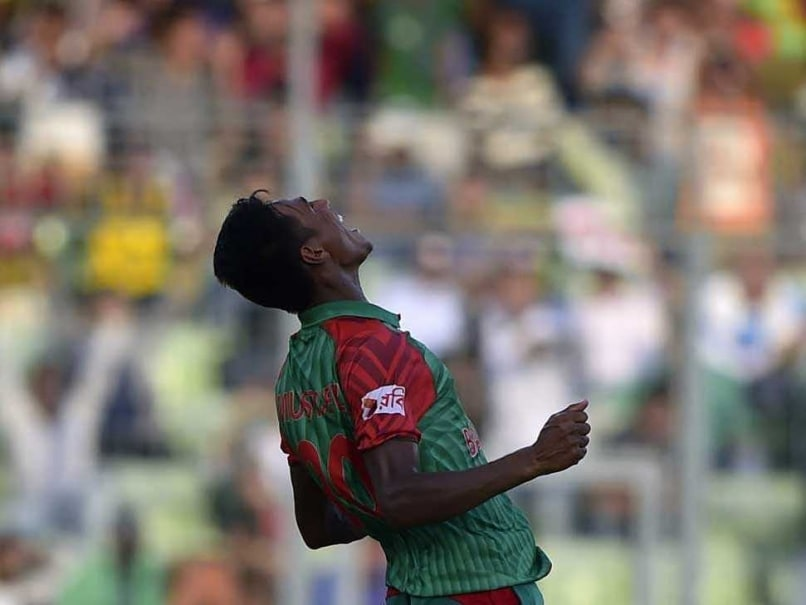 The cub turns into a tiger mustafizur celebrates one of his wickets