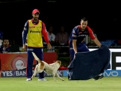 IPL: Dog Invasion Sparks Chaos in RPS vs DD Clash