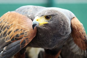 Wimbledon 2012: Thieves take flight with Wimbledon bird