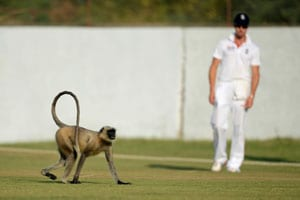 Monkey business temporarily halts England's tour match